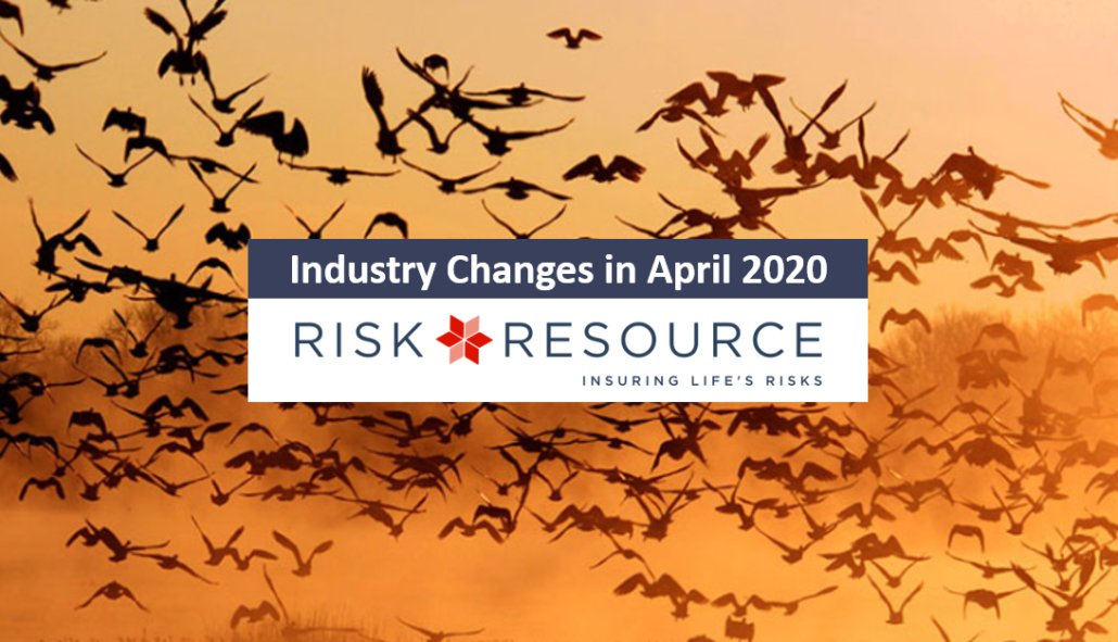 flock of birds, Risk Resource article title