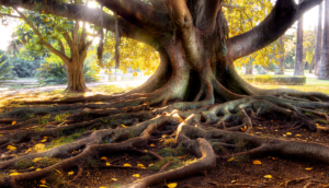 large tree trunk with roots, Risk Resource article title